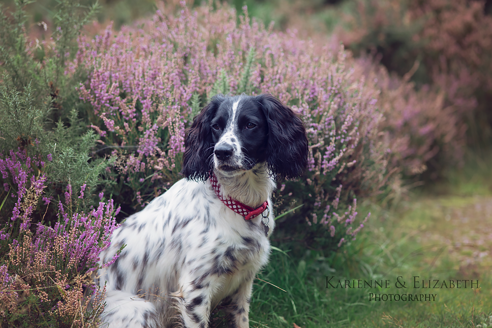 Dog photography Stoke on Trent
